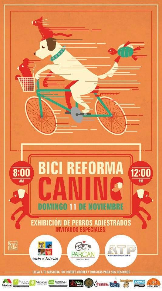 Bici Reforma Canino