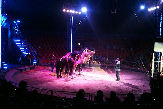 Caballos en Circo Rolex