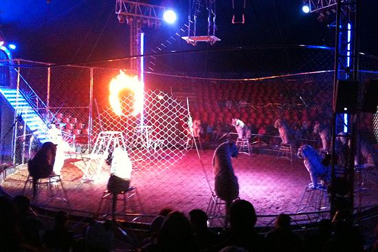 Tigres en Circo Rolex